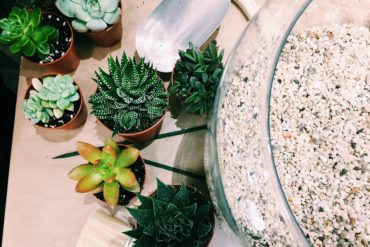 How Not To Kill Your Succulent Terrarium Life With Maria